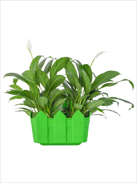 Cafe' Plant Pot